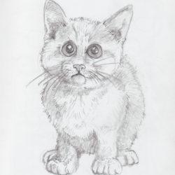 09 Kitten