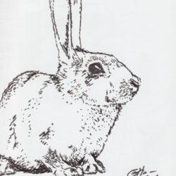 58 Rabbit