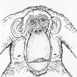 82 Monkey Monday