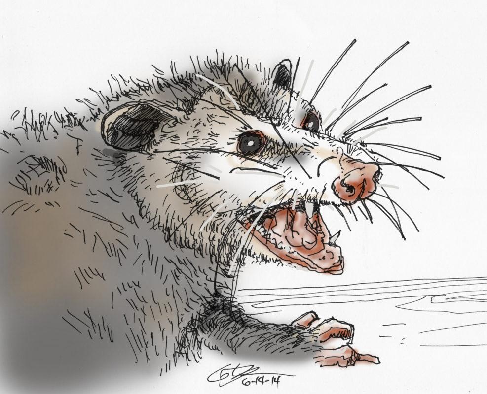 163 Possum